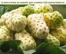 Noni Beneficios Diabetes/estado de Acre Brasilão